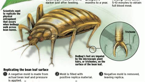 at what temperature do bed bugs die do bed bugs die in water 28 images fleas ticks control pestgomgt com sg the world s ugliest