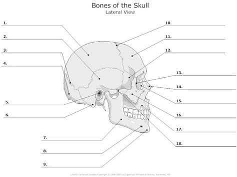 skull diagram 12 best skeleton images on human nursing