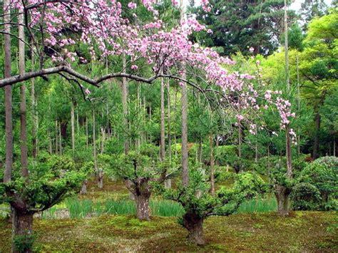 plants  planting   tsubo en zen garden