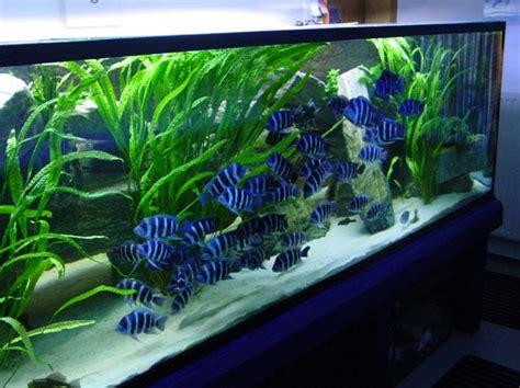 Pinset Aquarium menghias aquarium singgihw an s