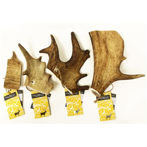 are antlers safe for puppies fallow antler chew