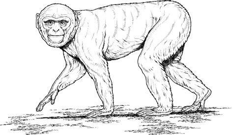 free howler monkeys coloring pages