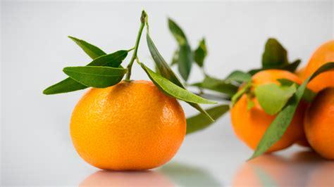 wallpaper daun resolusi tinggi wallpaper daun daun makanan buah jeruk keprok jeruk