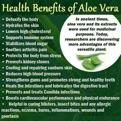 benefits of houseplants 17 best images about aloe vera tips on pinterest