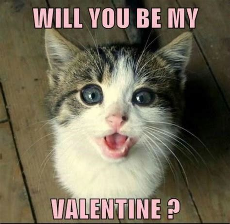 Cute Valentine Meme - 25 very funny grumpy cat meme pictures and photos
