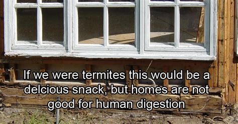 buying a house with termites should you buy a house with termites you like to live with bugs most buyers don t either