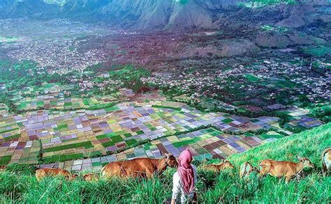 Karpet Gunung tak mungkin daki gunung rinjani nikmati pemandangan sawah bak karpet warna warni di bukit