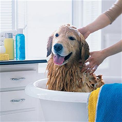 dog bathtubs for home use how do i start a pet grooming business make money