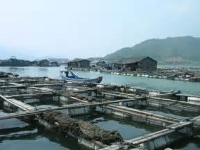 backyard aquaculture backyard fish farming raise fish in your home pond