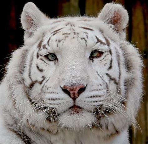 fotos animales hermosos 40 im 225 genes de animales hermosos taringa