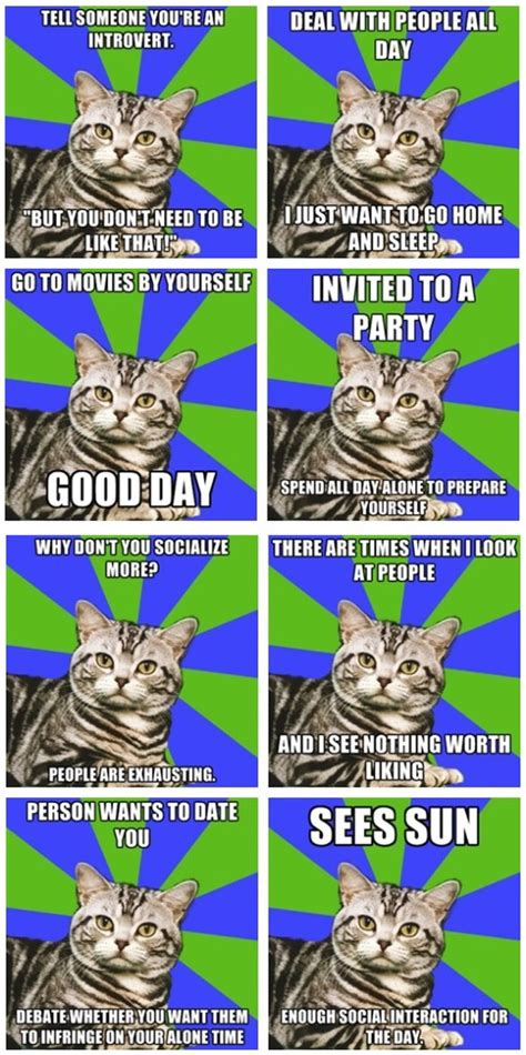Introvert Meme - 1000 ideas about introvert cat on pinterest anxiety cat
