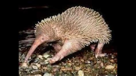 imagenes de animales raros del mundo los 20 animales m 225 s raros del mundo youtube