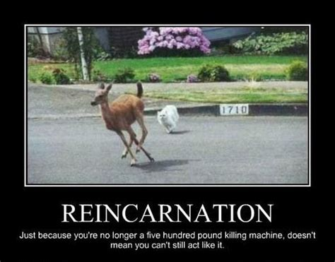 Funny Pics For Memes - st funny animal memes and humor pics picmia