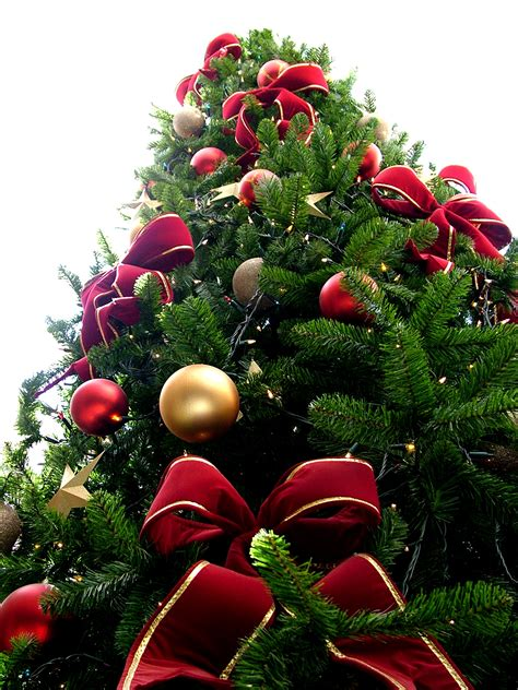 file christmas tree sxc hu jpg wikipedia