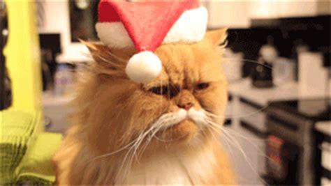 cute cat gifs page    cute cat gifs  days