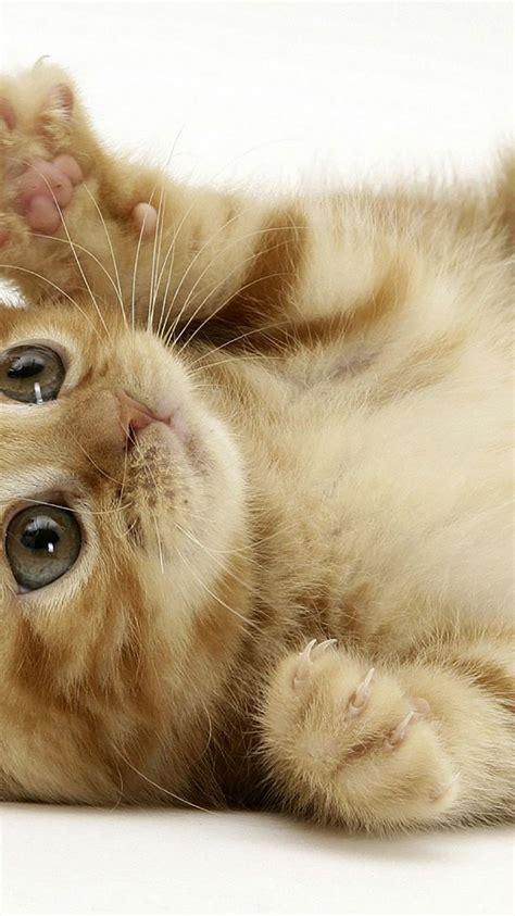 cute cat wallpaper zedge 50 hd cat iphone wallpapers