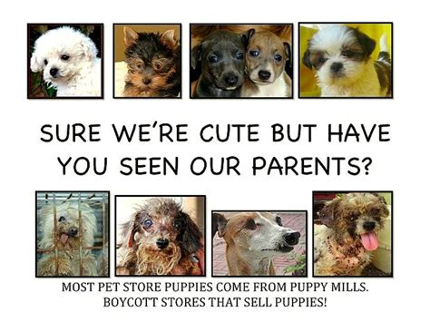 how to sell puppies philadelphia bans pet shops from selling puppy mill dogs