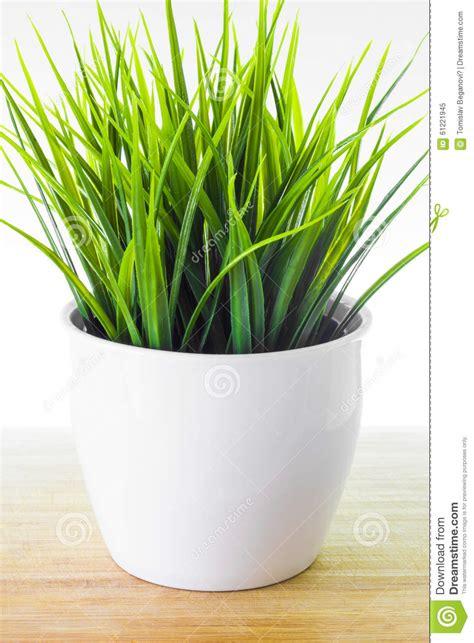 decorative faux grass plants decorative wheatgrass plant in white flower pot stock