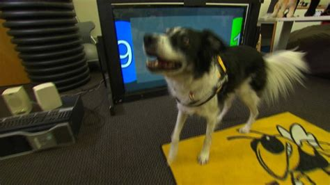 learn how to service dogs your could call 911 in an emergency here s how cnn