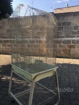 pappagallo in gabbia gabbia per pappagallo posot class