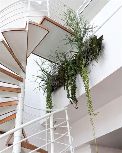 modern houseplants most beautiful decorative house plants creative home