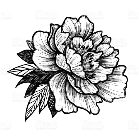 tattoo flower vector drawn peony vector pencil and in color drawn peony vector