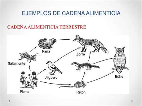cadenas troficas ejemplos terrestre cadena alimenticia