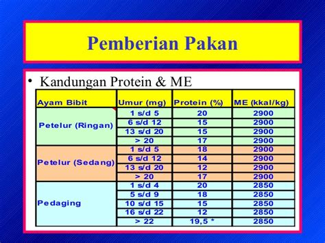 Bibit Ayam Petelur Doc ayam bibit1