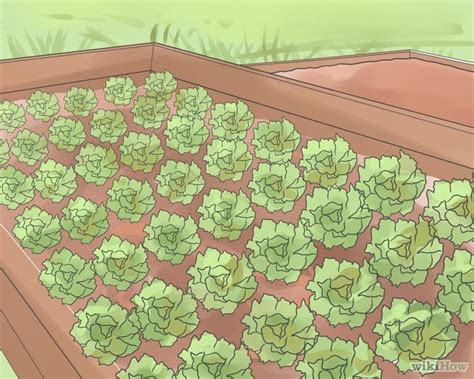 3 vegetables keeping you 3 ways to keep weeds out of your vegetable garden wikihow