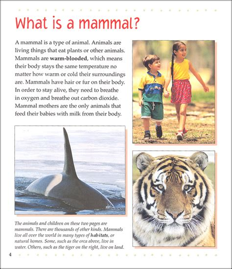 is a a mammal what is a mammal 054084 details rainbow resource center inc