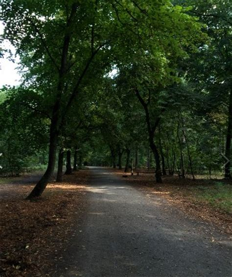 gänseessen grunewald grunewald forest berlin tyskland omd 246 tripadvisor