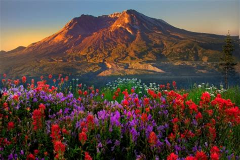 springtime  mt st helens mountains nature background