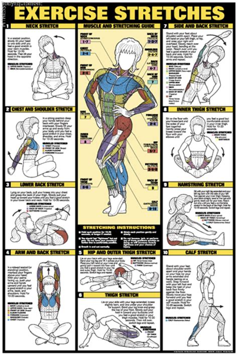 exercises   muscle groups  pictures shramkievua