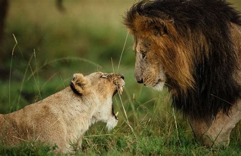 Natgeo World 5 confrontation photo by chris schmid national geographic