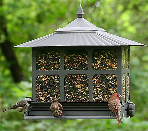 squirrel resistant bird feeders your backyard is our battle