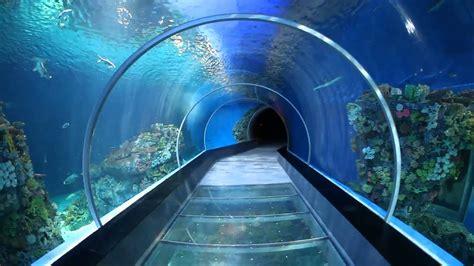 tunnel  fish fun  kids    national