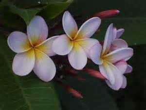 flowers julie in bali