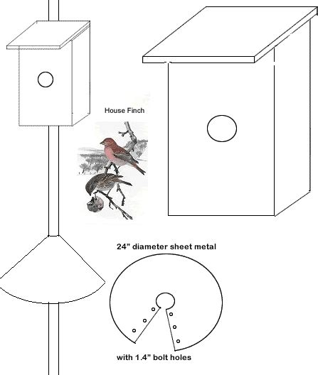 house finch nesting bird houses nesting box woodworking plan house finches