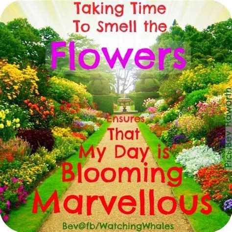 17 Best Images About Flower Quotes On Pinterest All Flower Garden Quotes