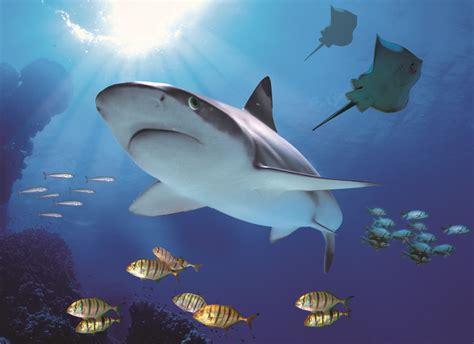 imagenes del señor otoño c 243 mo afecta la vida marina a la composici 243 n del agua de