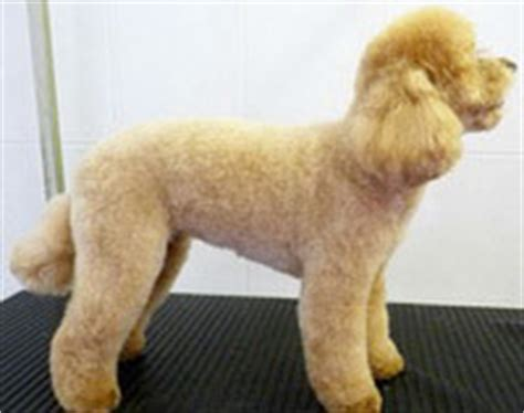 cheap haircuts oakville dog groomers professional dog grooming services rachael