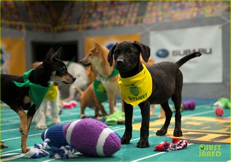 puppy bowl score puppy bowl 2017 meet the dogs the more photo 3853467 2017
