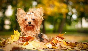 can dogs periods breeds info