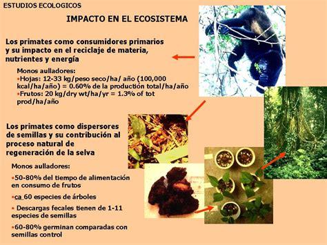 tics 2 darling animales de la selva nivel medio mayor unir tics 2013 sandra zorrilla