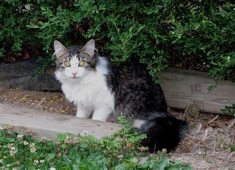 how to a stray how to deal with a stray cat