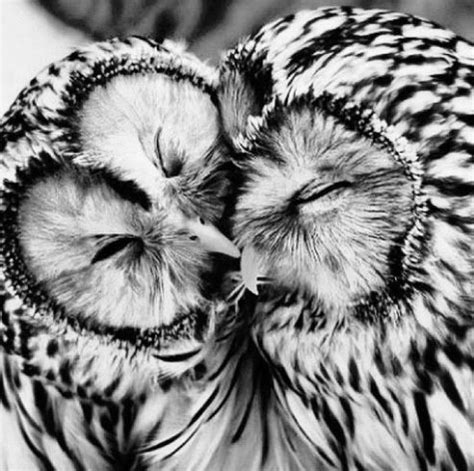 owl lovers animal black and white cute love image 590976 on