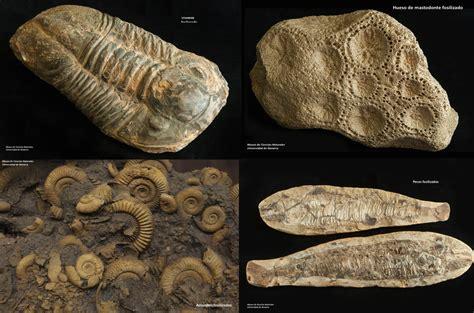 imagenes de fosiles microbio 191 existen bacterias f 243 siles