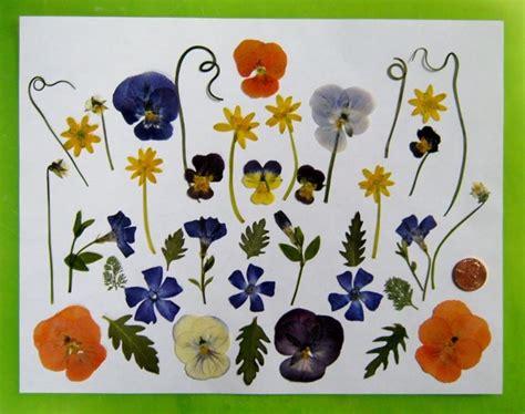 quadri con fiori pressati fiori secchi pressati fiori secchi fiori secchi