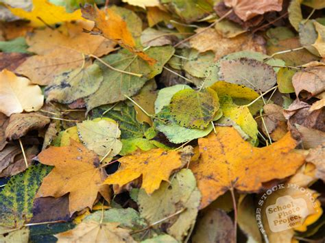 leaves pattern photography decomposed leaves free stock photo image picture dead