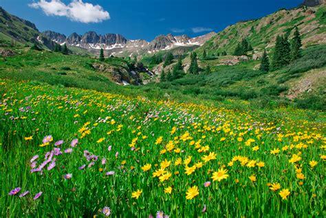 wildflowers in american basin